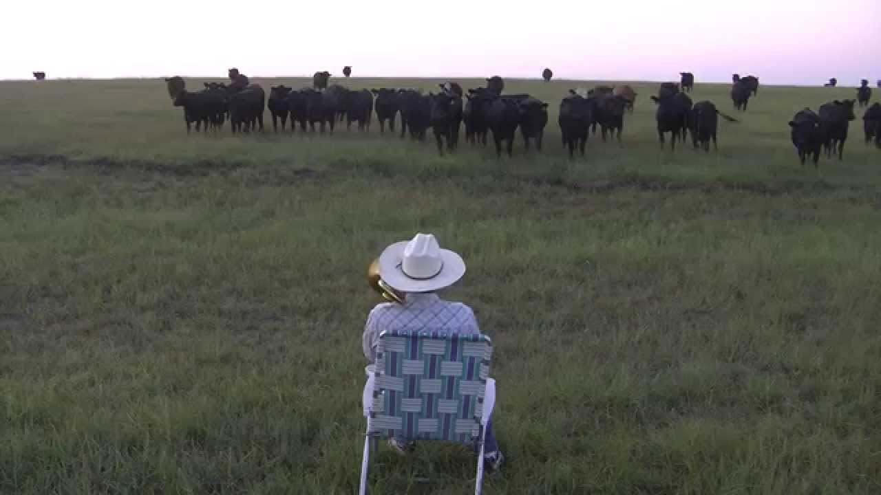 Have You Seen The Trombone Cows