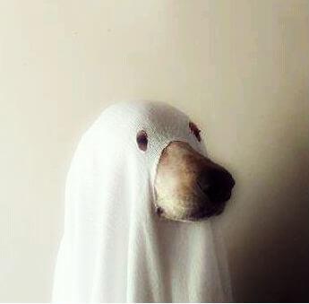 dumb-ghost
